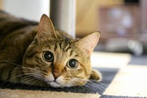 ネコノミクスによる経済効果!?猫ブームが及ぼす影響とは!?